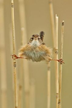 Funny animal pictures with 21 more pics like wren doing the splits. Some funny animal pictures with captions. Pretty Birds, Love Birds, Beautiful Birds, Animals Beautiful, Beautiful Pictures, Animals And Pets, Funny Animals, Cute Animals, Awkward Animals
