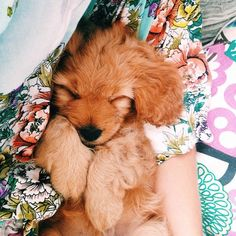 I need a furry doxie! Animals And Pets, Baby Animals, Funny Animals, Cute Animals, Nature Animals, Cute Puppies, Cute Dogs, Dogs And Puppies, Doggies