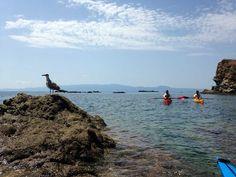 sea kayaking daytrip Kayaking Trips, Day Trips, Sea, Island, Explore, Water, Outdoor, Block Island, Water Water