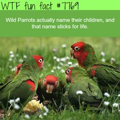 fun facts interesting \ fun facts - fun facts mind blown - fun facts interesting - fun facts for kids - fun facts about disney movies - fun facts about me - fun facts about love - fun facts funny Fun Facts About Love, Fun Facts For Kids, Fun Facts About Animals, Love Facts, Animal Facts, Animal Antics, Kids Fun, Parrot Facts, Bird Facts