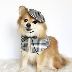 Dog Clothes - A Couple Of Steps Towards Finding Success Along With Your Dog Dog Harness, Dog Leash, Girl Beanie, Dog Clothes Patterns, Pet Fashion, Fashion Clothes, Dog Hoodie, Dog Dresses, Pet Clothes