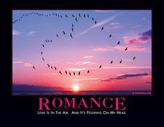 Romance-  Love is in the air. And it's pooping on my head. Haha! This is great.