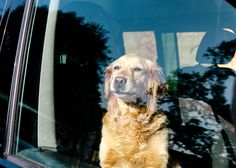 You already know that leaving your pet in the car can lead to heatstroke, but some of these other risk factors may surprise you.