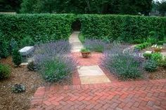 Lavandula angustifolia lavender herbs growing against green hedge on brick patio, in circle design Hedges Landscaping, Home Landscaping, Garden Hedges, Small Brick Patio, Brick Patios, Herb Garden, Garden Plants, Ficus Hedge, Flower Hedge