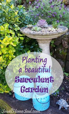 A succulent garden is an easy way to add color and interest to your garden.  A big plus is they are very low maintenance and drought tolerant.