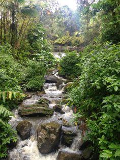 Puerto Rico: Rainforests  #PuertoRico #rainforest #ElYunque  #GOGOPRWeek