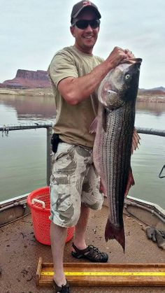 Big fish alert: biologists caught and released this 45-inch striped bass during a recent survey at Lake Powell. The best fishing of the year is happening now! Visit www.fishutah.org to plan your trip.