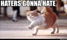 Cat knows haters rules