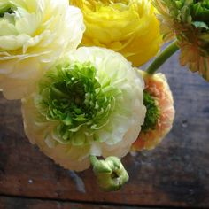 ranunculus are some of my favorites...