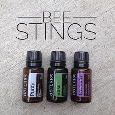 All three of these oils work great for bee stings, pulling out the poison, soothing the burn, and helping it heal up quickly. Apply 1 drop (diluted I they are super little) on location as often as they request. Bee Sting Essential Oil, Essential Oils 101, Essential Oil Blends, Roller Bottle Recipes, Doterra Oils, Doterra Blends, Natural Oils, Going Natural, Natural Healing