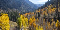 There is no shortage of beautiful fall foliage in the west.The lush green aspens, maples, larch, and willow transition into to vibrant yellows, oranges, and reds and transform some of our favorite landscapes to their most brilliant states.