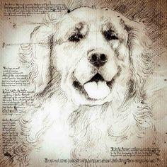 """""""Golden Retriever Face"""" Detail of a Da Vinci style drawing"""