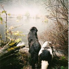 There's nothing for it, we'll have to swim... #newfoundland #forestadventures #dogsofinstagram
