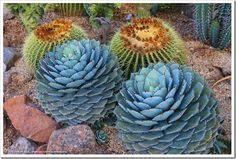 Succulents and More: 2015 Succulent Extravaganza plant porn (1 of 2)