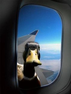 Pardon me, would you have any Grey Poupon? (Oh my god! Haha! I love to fly, I'm never nervous getting on a plane. But I'm always worried that I'll look out the window and find something sitting on the wing. I blame The Twilight Zone.)