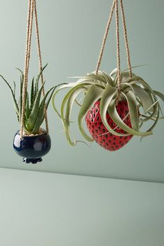 Shop the Hanging Fruit Pot and more Anthropologie at Anthropologie today. Read customer reviews, discover product details and more.