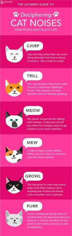 Cat Language Learning Cat Noises Those cat noises aren't just random sounds. They're vocalizations that mean something to your cat and you, too! Cat Facts Text, Cat Noises, Mean Cat, Cat Care Tips, Pet Tips, Dog Care, Kitten Care, Kinds Of Cats, Cat Behavior