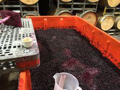 Parker Estate Wines (@parkerwine) | Twitter