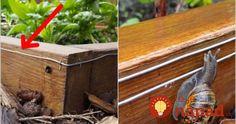 pest control ads How To Get Rid Slugs In Garden, Snails In Garden, Garden Pests, Snail Farming, Garden Fencing, Garden Bed, Garden Online, Cottage Garden Design, Market Garden