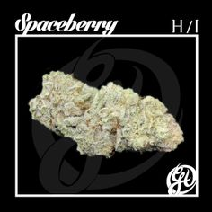 Space berry has landed! This beauty is COVERED in sparkling trichomes. This Hybrid Indica is perfect for relaxation, and decompression. Stop by the and check it out! Medical Marijuana, Cannabis, After School Special, Puff And Pass, Marijuana Plants, Kill Bill, Cancer Cure, Ganja, Natural Medicine