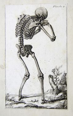 Skeleton from French anatomical engraving | Flickr - Photo Sharing!