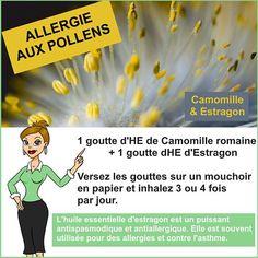 Estragon : Une huile essentielle efficace contre le rhume des foins ou les allergies aux pollens.