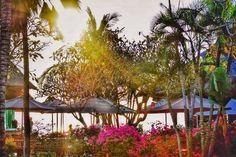 Let's wander in search of peace 1st stop Bali . . .  #bali   #throwback   #ayanaresort   #summer2015   #takemeback   #wannalivehereforever   #nature   #siren   #beautiful   #beach   #spa   #indianigers   #sunkissed   #morning   #palmtrees   #sofresh   #green   #rockbar   #indonesia   #ulwatu