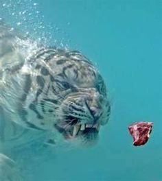 amazing animal photos - Bing Images