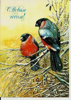 Bullfinch  Birds  Vintage Russian Postcard by LucyMarket on Etsy