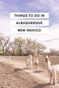 Things To Do In Albuquerque, New Mexico by A Taste Of Koko. Explore New Mexico in 2019 with this ultimate travel guide! New Mexico Vacation, New Mexico Road Trip, Travel New Mexico, Tennessee Vacation, Tennessee Cabins, New Mexico Albuquerque, Albuquerque News, Alaska Travel, Travel Usa