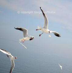 Seagull on the way by GorgeousPhotos on Etsy, $15.00