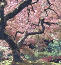 japanese cross stitch patterns | Japanese Maple Cross Stitch Fine Art Pattern Trees Gardens | eBay