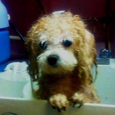 Wet dog! Cutest puppy ever <3