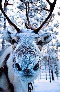 It's Snow Christmassy ~