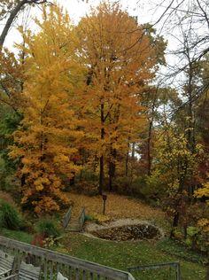 Fall at Amigo