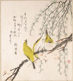 """""""""""Japanese White-eyes with Plum Tree and Willow, from Spring Rain"""" """" SURIMONO 摺物 de Kubo Shunman 窪俊満 (1757-1820). Les surimono sont de luxueuses estampes japonaises, jouant le rôle de cartes de vœux, et imprimées à titre privé."""