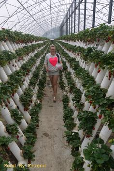 What a great way to grow strawberries!!!