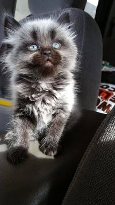 The kitten who holds the universe in her eyes.   21 Very Important Kitten Pictures You Need To See by sylvia alvarez