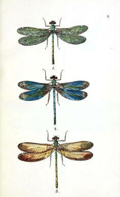 dragonflies2.jpg (621×1024)
