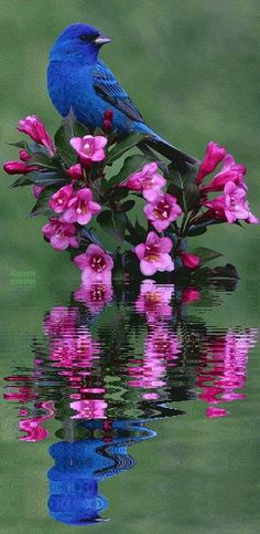 Beautiful Photo. Shot  -  Reflection