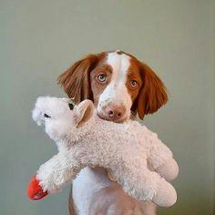 Stuffed Brittany Spaniel Toy