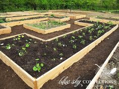 Raised garden beds - love this layout.  Thinking we could build one a year to spread out the costs