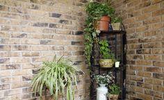 Vor allem robuste und pflegeleichte Grünpflanzen eignen sich für dunkle Ecken