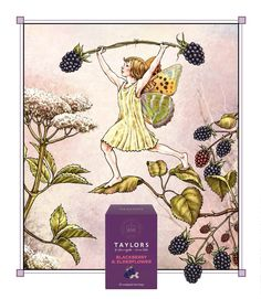 Blackberry and Elderflower fairy, created for Taylors of Harrogate and based on the Flower Fairies created by author and illustrator Cicely Mark Barker (Tea)