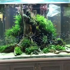 45 Captivating Fish Tank Aquariums Design Ideas A fish tank aquarium is not only beautiful, but it is fairly easy to maintain. Many people have fish tanks […] Planted Aquarium, Aquarium Aquascape, Betta Aquarium, Aquarium Setup, Aquarium Design, Aquarium Landscape, Betta Fish Tank, Freshwater Aquarium Fish, Aquarium Lighting