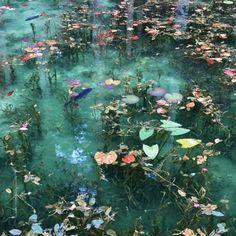Monet's Pond, Seki City, Gifu Prefecture, Japan - my inspiration - Blumen Gifu, New York Tipps, Nature Aesthetic, Aesthetic Green, Pics Art, Claude Monet, Faeries, Pretty Pictures, Wall Collage
