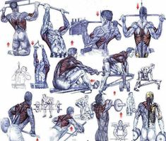 Базовые упражнения на мышцы спины