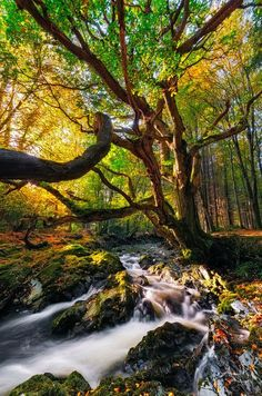 Autumn at Tollymore Forest, Northern Ireland
