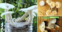 Cómo+cultivar+setas+en+restos+de+café