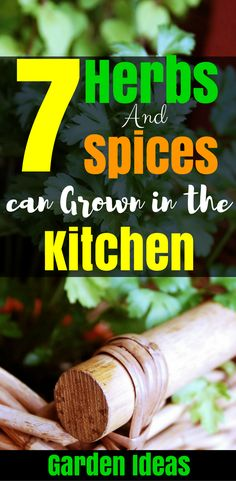 7 Herbs and Spices That can be Easily Grown in the Kitchen, Some Kitchen Ideas and garden Ideas, Gardning for Beginners at home.
